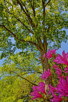 Azalea and tree by Julie Grandfield