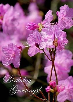 Rosanne Jordan - Azalea Birthday Greeting