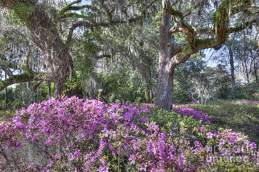 Dale Powell - Azalea in Bloom