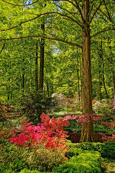Azaleas in the Woods by Julie Grandfield