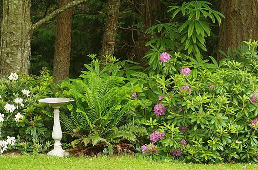 Marilyn Wilson - Backyard Garden 2