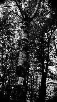 Dawn Hagar - B W Birch