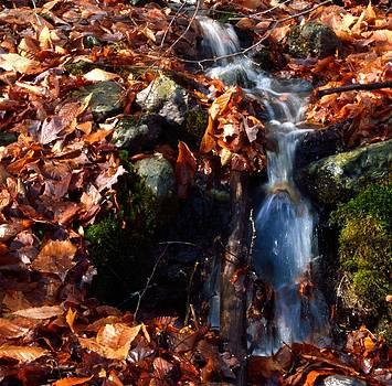 Babbling brook by Glenn Sanborn