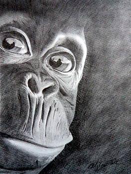 Baby Chimpanzee by Skyrah J Kelly