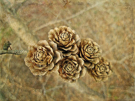 Mother Nature - Tamarack Cones Look Like Little Wooden Flowers