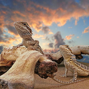 Baby Dragons by Stephen Kinsey