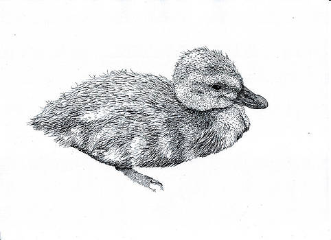 Baby Duck by Karl Addison