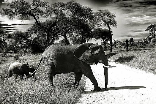 Baby Elefant with Mom by Christine Sponchia