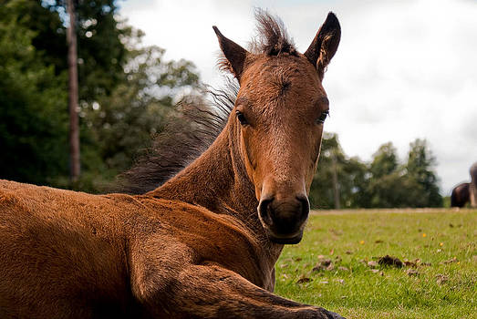 Baby Foal by Linda Freebury
