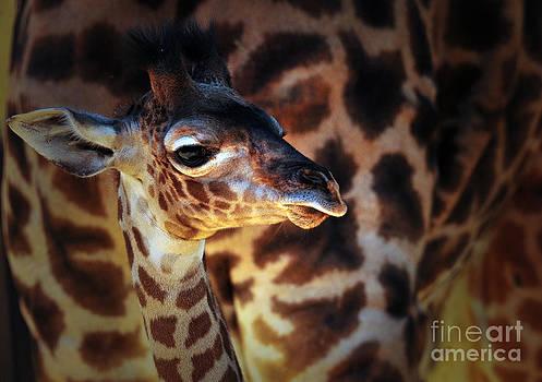 Baby Giraffe by Thanh Nguyen