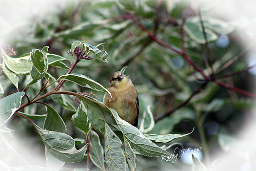 Kathy J Snow - Baby Golden Finch