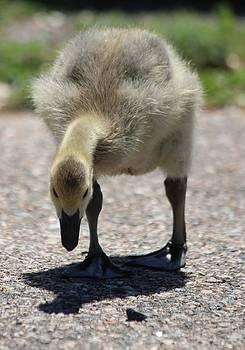 Baby Goose by Cinneidi Comfort