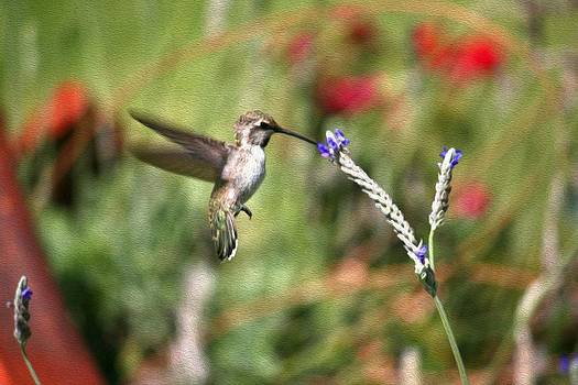 Veronica Vandenburg - Baby Hummingbird Feeding
