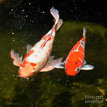 Baby Koi Makes An Appearance by Susan Wiedmann