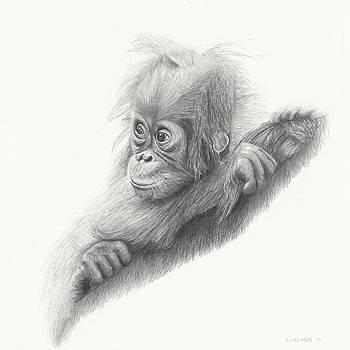 Baby Orangutan by Sandra Weiner