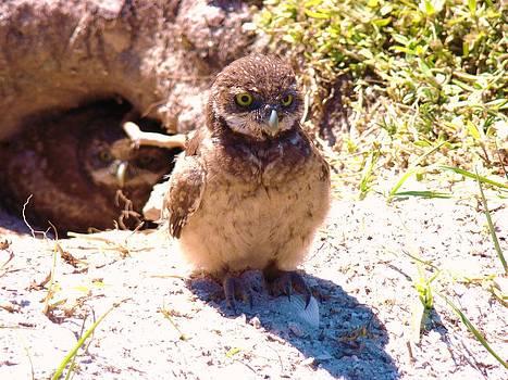 Baby Owl 2 by Van Ness