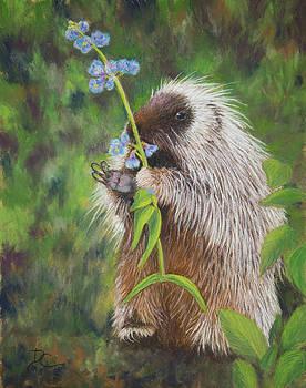 Dee Carpenter - Baby Porcupine