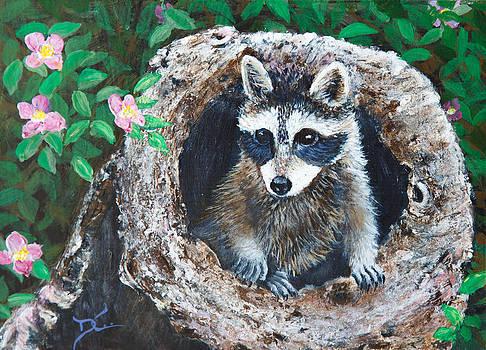 Dee Carpenter - Baby Raccoon