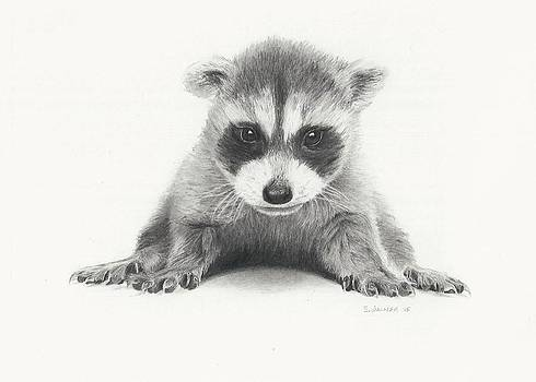 Baby Racoon by Sandra Weiner