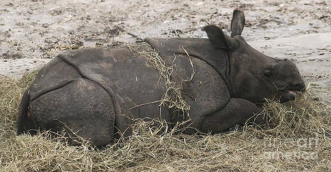 Baby Rhinoceros by Lynn Jackson