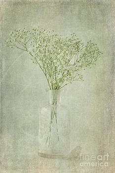 Baby's Breath by Cindi Ressler