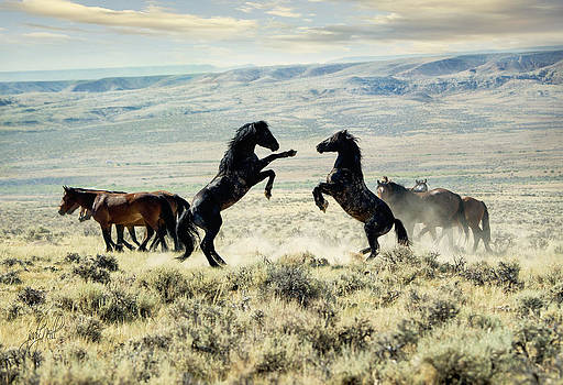 Bachelors Sparring by Judy Neill