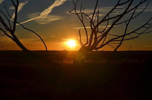 Back Forty Sunrise by Clarice  Lakota