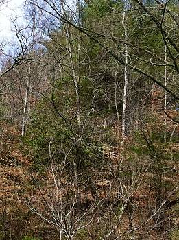 Back Woods Blue Sky by Robert J Andler