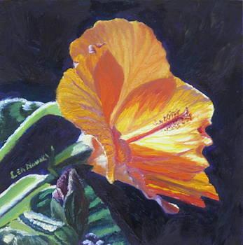 Lea Novak - Backlit Hibiscus