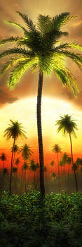 Backlit Palm by John Robichaud