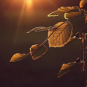 Backlit by Patrick Horgan