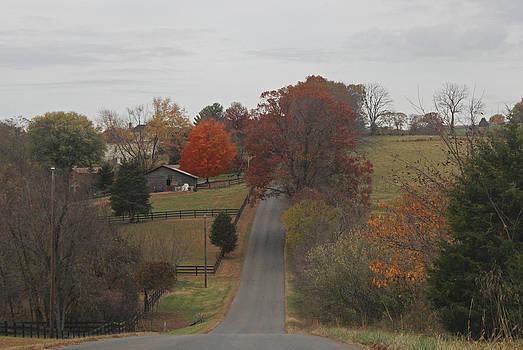 Backside country road of VA by Renee Braun