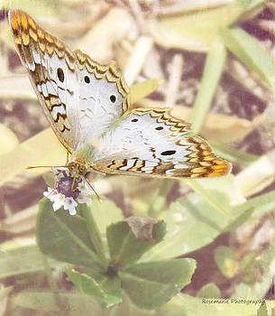 Backyard Butterfly by Vanessa Parent
