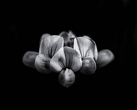 Backyard Flowers In Black And White 5 by Brian Carson