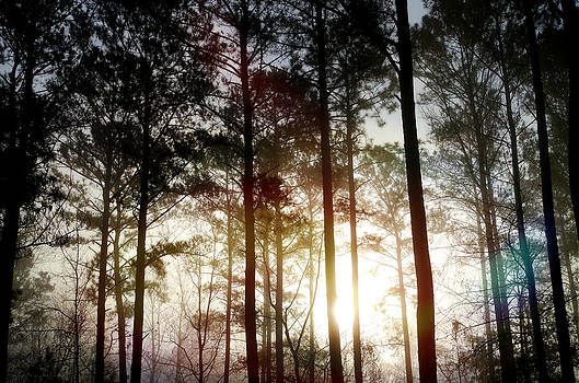 Backyard Sunrise by Jessica Yudis