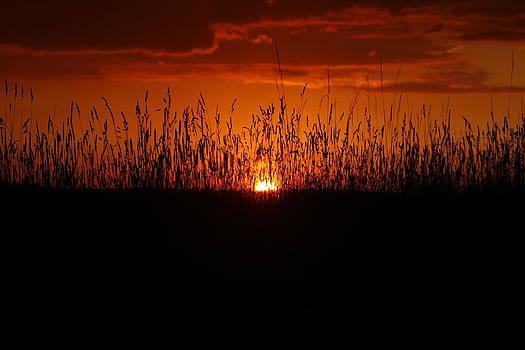 Backyard Sunset by David Simons