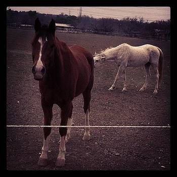 Bad Picture. #horses #photo #farm #texas by Kross Media