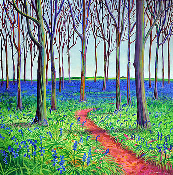 Badbury bluebells by Jane Tomlinson