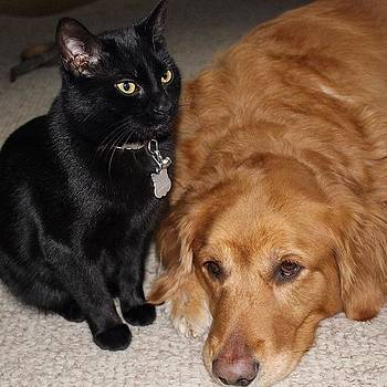 Bagheera And Indy ❤️❤️ by Meg Pace