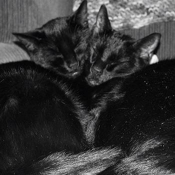 Bagheera And Onyx Keeping Warm In Their by Meg Pace