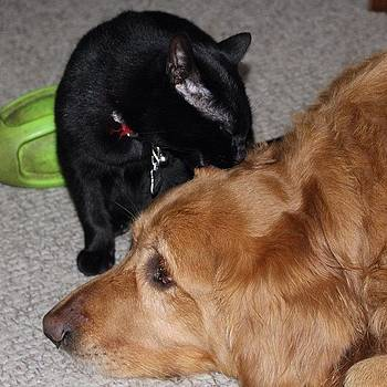 Bagheera Loves Indy So Much! #bagheera by Meg Pace