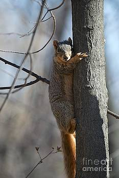 Baker Squirrel by Joseph Yarbrough