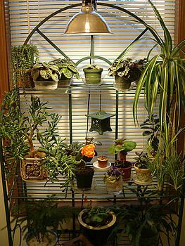 Indoor Hanging Garden by John Arthur Robinson