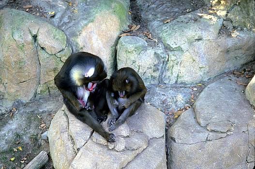Harold E McCray - Balboa Park - San Diego Zoo