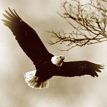Bald Eagle by Alisha Luby