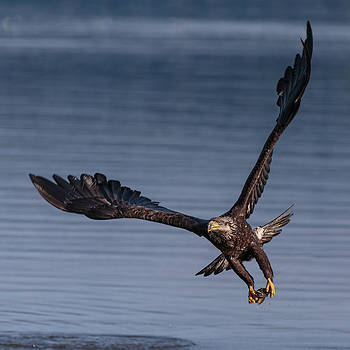 Wes and Dotty Weber - Bald Eagle At First Light