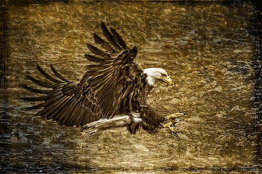Wes and Dotty Weber - Bald Eagle Capture