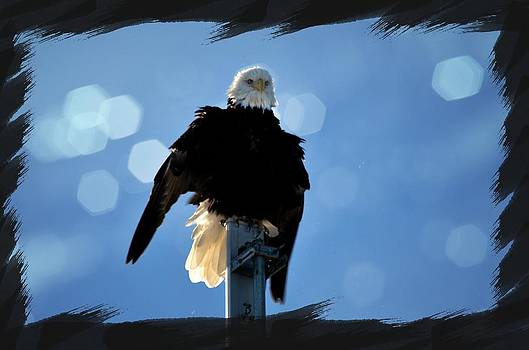 Debra  Miller - Bald Eagle Dreaming