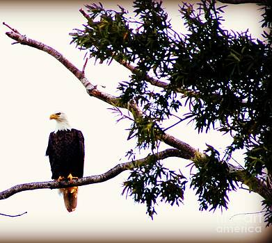 Bald Eagle by Megan Wilson