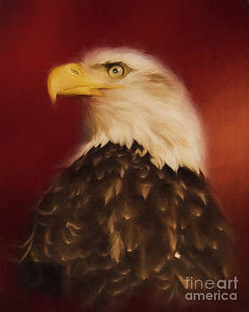 Bald Eagle Portrait by Pam  Holdsworth